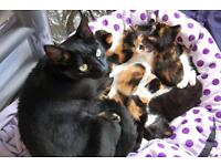 Adorable kittens for sale, looking for a good, responsible home, vet checked
