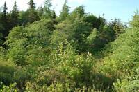 Land for sale in beautiful Conception Harbour