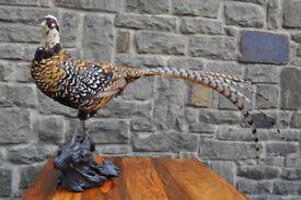 vintage reeves pheasant taxidermy