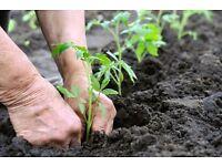 Gardening Services Offered