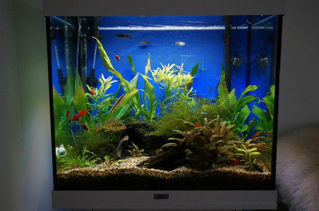 juwel lido 120 aquarium cabinet with co2 uv canister filtration with booster in erith