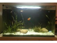 150l aqua one tropical fish tank with multicolour led light and fish 80x47x40cm