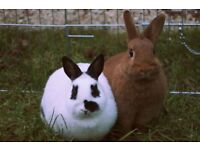 2 Gorgeous Rabbits looking for a loving home