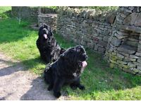 Wanted to rent small property with garden for 2 dogs Gloucestershire area
