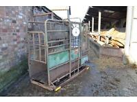 Tubar Cattle Crush c/w weigh scale , head yolk and sliding side gate - NO VAT