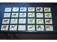 1938 Set of 24 Gallagher's Dogs Cigarette Cards Individually Framed in Glass