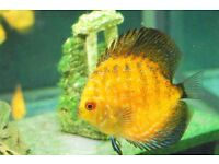 South american tropical fish