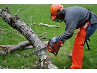 kings Norton tree services