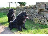 Property Wanted to rent 1/2 bed with garden for 2 dogs most areas considered