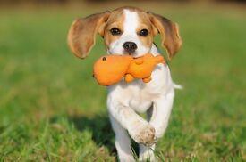 Dog Walker & Handler