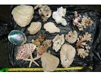Corals and marine rocks
