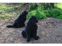 Urgently wanted to rent property any area suitable for 2 dogs anything considered