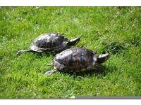 2 turtles + pump + tank