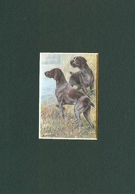 * German Pointers - Dog Art Print - CLEARANCE