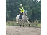 Beautiful apaloosa mare for sale