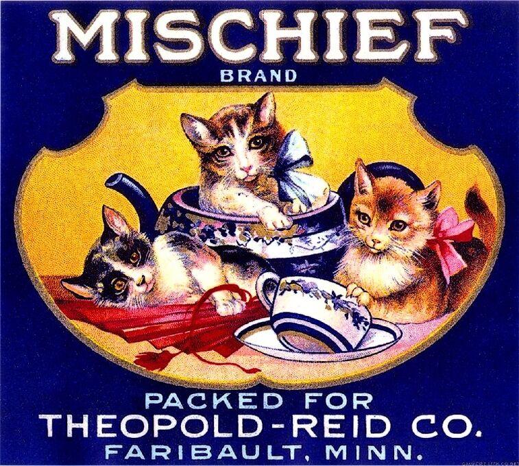 Faribault Mischief Kittens Cats Kitten Cat Orange Citrus Fruit Crate Label Print