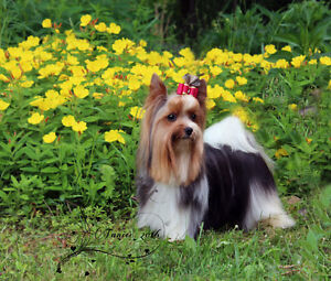 All Breed professional dog grooming