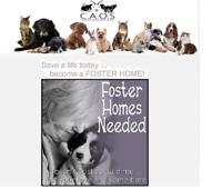 Companion Animal Outreach Society