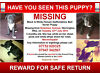 missing puppy Warrington