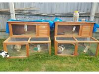 Male and female rabbits with hutches