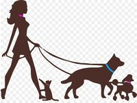 Dog Walker-Paws Above The Rest
