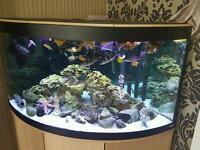Cichlids and other tropicals