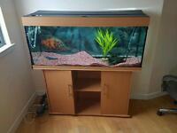 Juwel fish tank with stand +1 tiger oscar fish