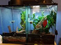 Day geckos and vivs