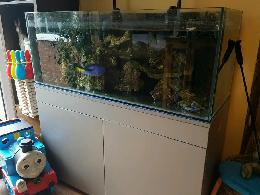 4ft rimless fish tank and silver cupboard in southport for Rimless fish tank
