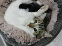 4 x kitten for sale
