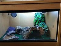 Leopard geckos x2 male and female with set up