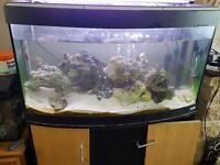 Fluvial fish tank