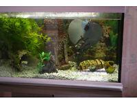 Tropical 70 lit Fish tank Aquarium + Cabinet + Spares.