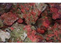 marine live rock ,for reef tank aquarium