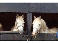 11hh ponies