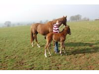 Thoroughbred Stud Hand to work with Mares and Foals Stratford upon Avon