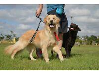 Dog Walker Cuffley, Goffs Oak area.