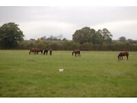 Stud Hand Part Time / Full time hours till October. Yearling preparation