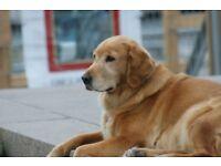 Dog Walker in Sandy