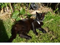 """good home needed for """"ANYA"""" 4years old,"""