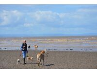 Dog Walker and Pet Carer required to work in the fishponds and surrounding areas