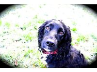 Dog walking & pet care services in Sonning Common, Peppard, Henley on Thames. South Oxfordshire.