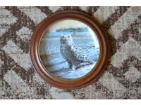 Collectors Plates. Snowy Owl & Great Horned Owl