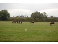 Thoroughbred Stud: Stud Hand Part time live out Near Stratford upon Avon