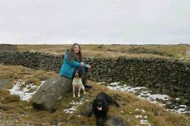 Dog walking, home visits and dog grooming