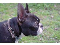 Dog runner ../walker