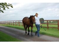 Part Time Stud Hand Yearling Preperation in Eydon Northamptonshire