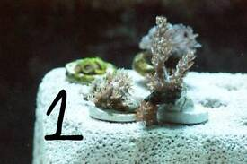 Soft coral packs 1 2 3