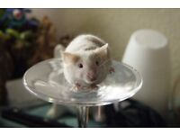 Mice for sale