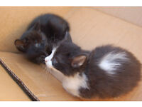 Kittens ready for a good home.